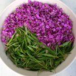 Иван-чай: лекарственные свойства, состав, польза и противопоказания, способы заваривания